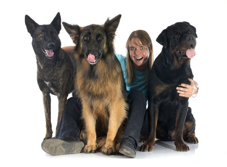 dutch girl: holland shepherd rottweiler, and german shepherd with his owner in a studio Stock Photo