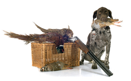 dead dog: hunting games and dog in front of white background