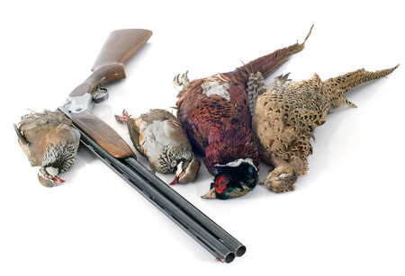 kuropatwa: polowanie gry przed białym tle