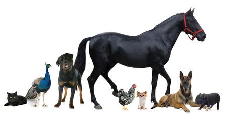 koty: Grupa zwierząt przed białym tle