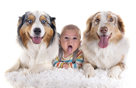 three months baby and dogs in front of white background photo