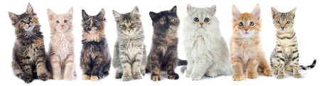 group of kitten in front of white background