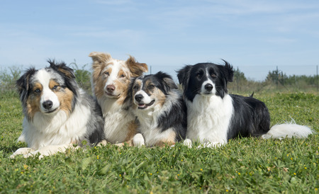 group of dogs lying down in the nature Stock Photo
