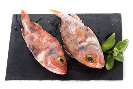 redfish: ocean perch in front of white background Stock Photo