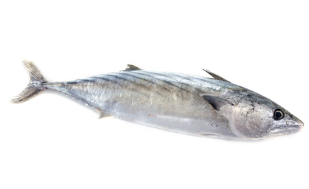 seafish: fresh bonito in front of white background