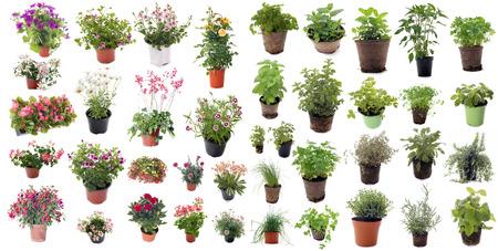 흰색 배경 앞의 허브와 꽃 식물 방향족