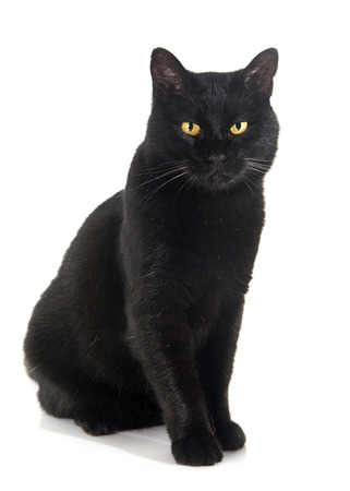 black cat in front of white background Imagens