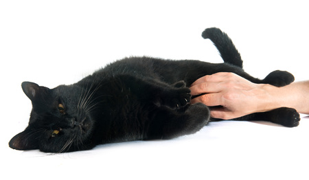 male hand: black cat in front of white background Stock Photo