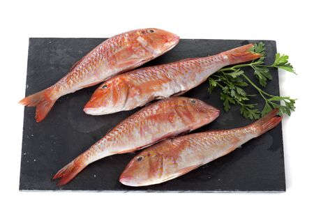 Red mullet in front of white background