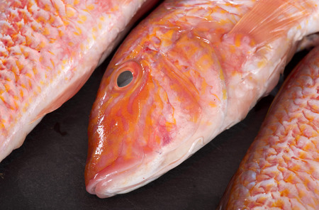 redfish: Red mullet in front of white background