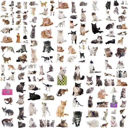 group of cats in front of white background