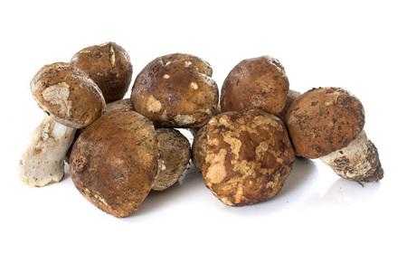 cep mushroom: cep mushroom in front of white background Stock Photo