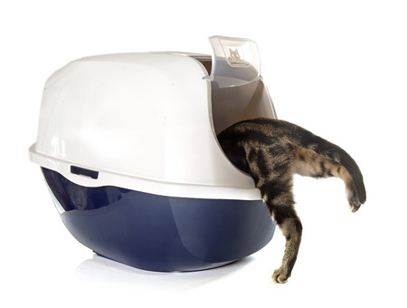 pissing: Closed cat litter box in front of white background