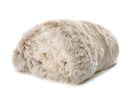 blanket: white blanket in front of white background