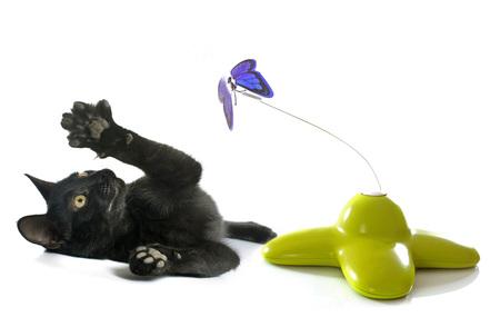 흰색 배경 앞의 고양이 장난감
