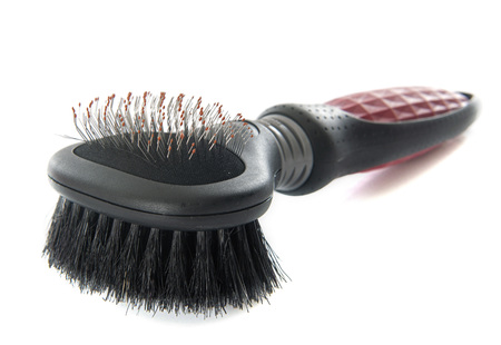 cat grooming: brush for pet in front of white background