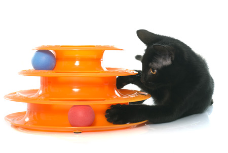 cat playing: toy for cat in front of white background Stock Photo