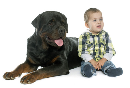 white dog: little boy and rottweiler in front of white background