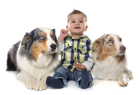 two stroke: little boy and dogs in front of white background Stock Photo