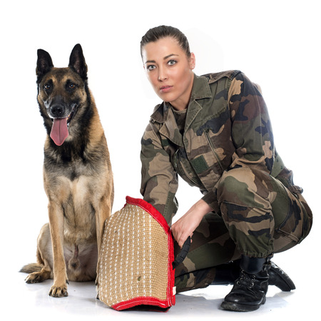 woman soldier and malinois in front of white background Stock Photo
