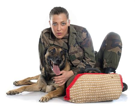 perro policia: Mujer soldado y malinois delante de fondo blanco Foto de archivo
