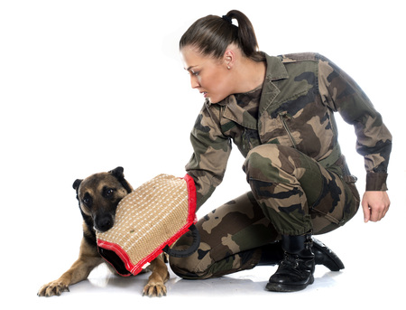 woman soldier and malinois in front of white background Standard-Bild