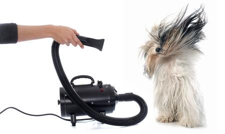 Sèche-cheveux pour chien devant un fond blanc Banque d'images - 50367228