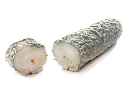 queso blanco: queso de cabra con ceniza en la frente de fondo blanco Foto de archivo