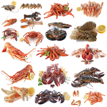 shellfish: seafood and shellfish in front of white background Stock Photo