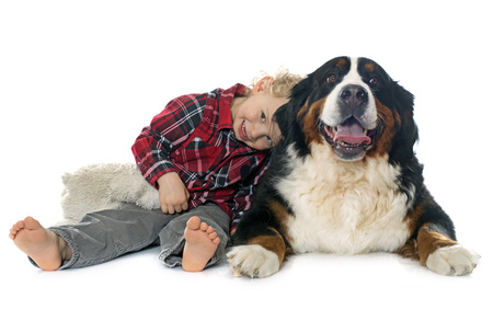 two stroke: little boy and dog in front of white background Stock Photo