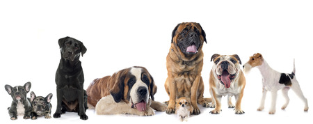 group of dogs in front of white background Standard-Bild