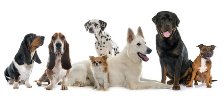 group of dogs in front of white background Stock Photo