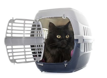 kennel: large black cat in kennel in front of white background