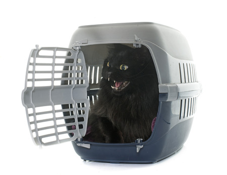 carry on: large black cat in kennel in front of white background