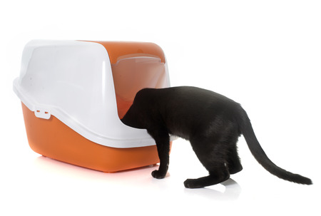 defecate: cat and litter box in front of white background