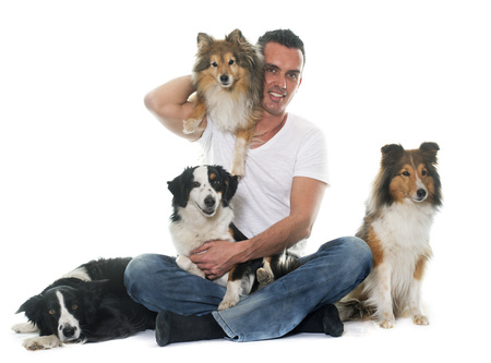 miniature collie: four beautiful dogs and man in front of white background