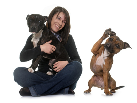 pitbull: woman and staffordshire bull terrier in front of white background