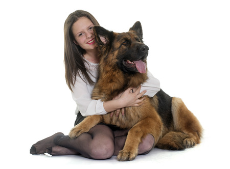 big dog: teenager and adult german shepherd in front of white background