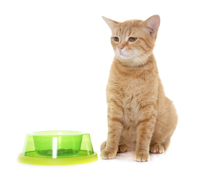 white cat: ginger cat in front of white background