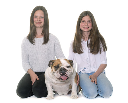 two stroke: english bulldog and girls in front of white background