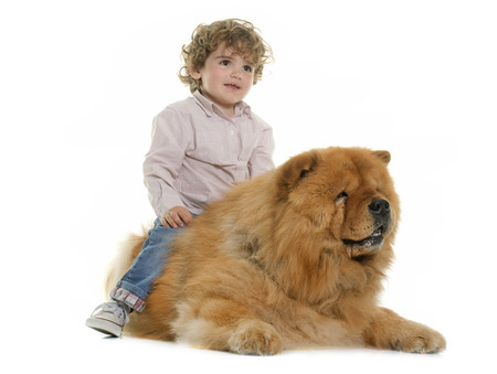 chow: chow chow and boy in front of white background