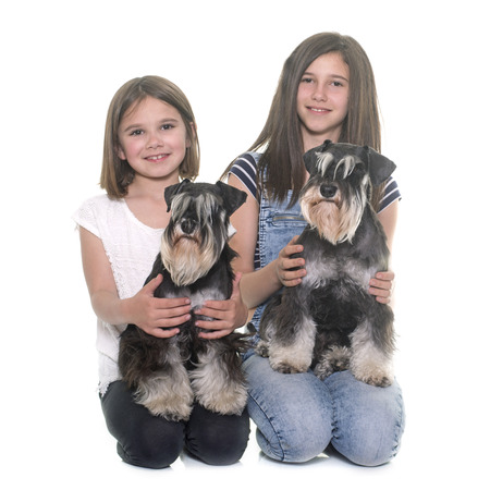 two stroke: children and miniature schnauzer in studio