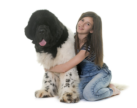 newfoundland dog: teenager and newfoundland dog in front of white background