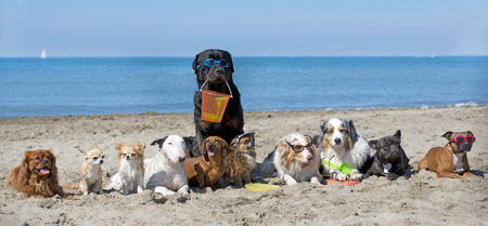dogs standing on the beach, in France