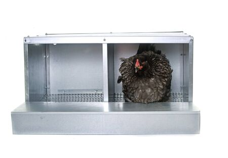 metalic: metalic nest box for chicken in front of white background