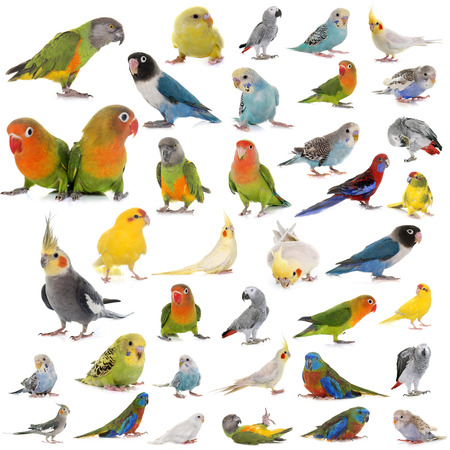 group of parrots in front of white background