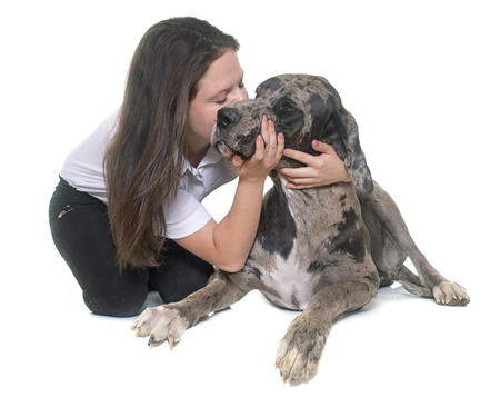 dane: Great Dane and teenager in front of white background Stock Photo