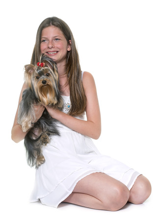 prothesis: young yorkshire terrier and child in front of white background