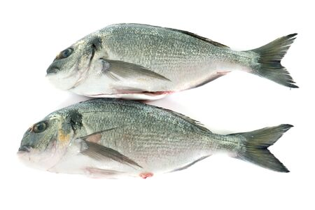 sparus: Gilt-head bream in front of white background