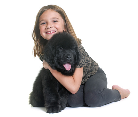 black and white newfoundland dog: puppy newfoundland dog and child in front of white background Stock Photo